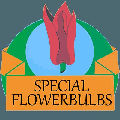 Specialflowerbulbs.com